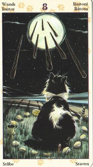 异教徒猫咪塔罗牌